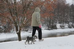Der Mann, der mit einem Hund am bewölkten Wintertag geht lizenzfreie stockfotos