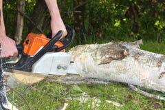 Der Mann schneidet Baum mit Kettensäge Stockbild