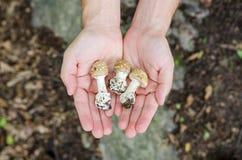 Der Mann, der in seinen Palmen hält, vermehrt sich - Herbstwaldszene von Europa explosionsartig lizenzfreie stockfotografie