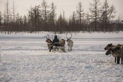 Der Mann sledging mit Rotwild in der schneebedeckten Feldbahn stockbilder