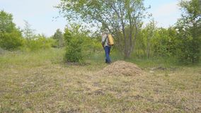 Der Mann sprüht das Gras gegen Insektenplagen Sprühen von Insektenvertilgungsmitteln am Rasen stock video