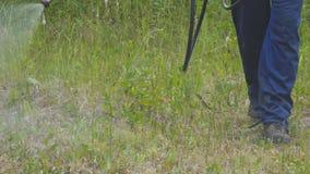 Der Mann sprüht das Gras gegen Insektenplagen Sprühen von Insektenvertilgungsmitteln am Rasen stock video footage