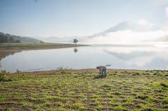 Der Mann stehen See anh alleinbaum auf dem See, Sonnenaufgang am mountai bereit, nebelig, Wolke auf dem Himmel stockfotografie