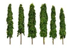 Der Mast-Baum lizenzfreie stockfotos