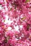 Der meiste schöne Blüten-Rahmen Stockfotos