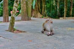 Der meiste wilde Affe, der weg im Park sitzt und schaut Stockbilder