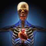 Der menschliche Körper durch Röntgenstrahlen auf blauem Hintergrund lizenzfreie abbildung