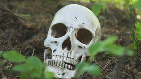 Der menschliche Schädel liegt im Wald, und die Fliegen kriechen auf ihn im Wald stock footage