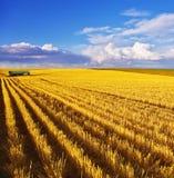 Der Mittag auf Feldern von Montana Stockfotografie