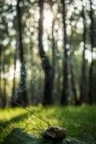Der Moment für Meditation, Vertikale lizenzfreie stockfotografie