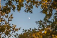 Der Mond in einem Rahmen von Blättern, flacher Fokus Stockfotos