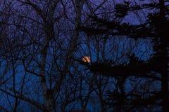 Der Mond hinter Bäumen Lizenzfreies Stockfoto