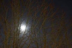 Der Mond ist rund und hell lizenzfreies stockbild