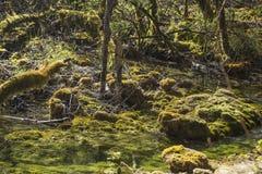 Der moosbedeckte Samt-Wald Stockfotos