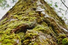 Der moosige Baumstamm - Kanada Stockfotografie