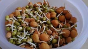 Der Morgen gesund essen Sprösslinge und Bohnen Stockbilder