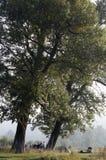 Der Morgen unter dem Baum Stockfotos