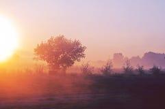 Der Morgennebel Stockbilder