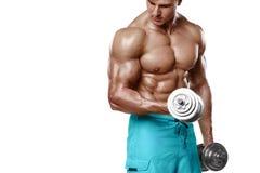 Der muskulöse Mann, der das Handeln ausarbeitet, trainiert mit Dummköpfen an den Bizepsen, die starke männliche nackte Torso-ABS, Stockbilder