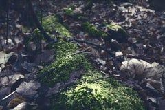 Der mystische Wald ist sofort zum Hängen an der Wand bereit stockbilder