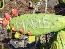 Der Name, den der Name 'Marley 'auf einem großen grünen und stacheligen Kaktusblatt schnitzte stockbild