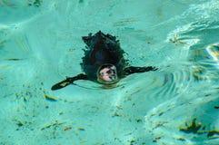 Der nass Pinguin einzeln Fotographie eingelassen einem Zoo lizenzfreie stockfotografie
