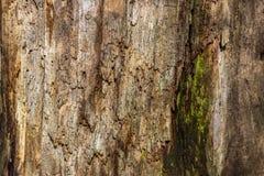 Der natürliche Hintergrund des faulen Holzes auf sehr alten Baumstümpfen Die Beschaffenheit der alten Stümpfe lizenzfreies stockbild