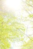 Der natürliche unscharfe abstrakte Hintergrund, der vom Baum gemacht wird, verlässt Lizenzfreie Stockfotos