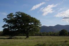 Der Nationalpark Killarneys Stockfotos
