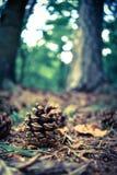 In der Natur stockfoto