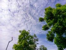 Der Naturlandschaftsszene Prajinburi Thailand blauer Himmel und Stadtstraße zum natürlichen Gefühl frisch und attraktiv in Asien  Lizenzfreie Stockfotografie