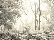 Der Nebel II Stockfoto