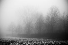 Der Nebel und der dunkle Wald Lizenzfreie Stockfotografie