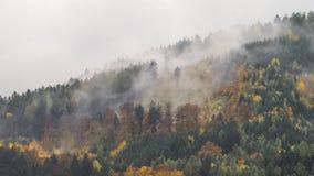 Der nebelige Wald des Herbstes Lizenzfreie Stockfotos