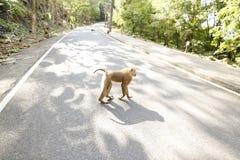 Der nette Affe, der auf Straße in der Sonne geht, strahlt aus Lizenzfreie Stockbilder