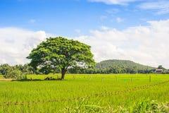Der nette Bergblick vom Reisfeld Stockbilder
