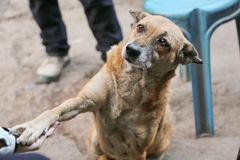 Der nette Hund wünschen ein Lebensmittel Lizenzfreies Stockbild