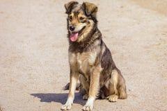 Der nicht reinrassige Hund Lizenzfreie Stockbilder