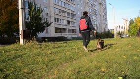 Der nicht reinrassige Hund geht nahe bei dem Eigentümer auf einer Leine beim Gehen stock video footage