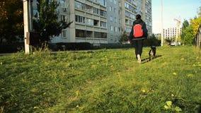 Der nicht reinrassige Hund geht nahe bei dem Eigentümer auf einer Leine beim Gehen stock footage