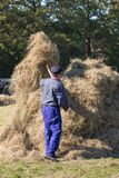 Der niederländische Landwirt ist Handwerk Heu zu einem Heuschober sammelnd Stockfotos