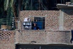Der Nil, nahe Aswnm, Ägypten, am 21. Februar 2017: Ägyptische alte Frau, die den Nil von der Terrasse ihres schlechten Ziegelstei Stockbild