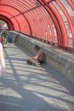 Der obdachlose Mann bittet um Almosen, Leute überschreiten vorbei stockfotografie