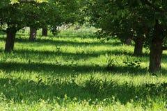 Der Obstgarten Stockfotografie