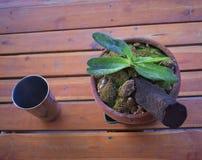 Der orchideenbaum auf dem Tisch gesetzt lizenzfreies stockbild