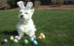 Der Ostern-Hund Lizenzfreie Stockfotos