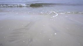 In der Ostsee stock video footage
