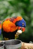 Der Papagei Lizenzfreie Stockfotografie