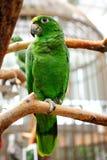 Der Papagei Stockfotografie