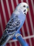 Der Papagei lizenzfreie stockbilder